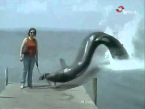 Sea Monster Eats A Dog Youtube