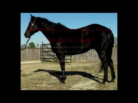 Mr Quiet Cash - Finshed 1-2D Barrel Gelding Youth Rodeo Horse - Dash For Perks