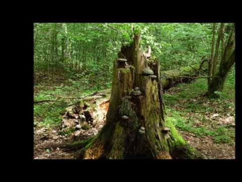 BIAŁOWIEŻA NATIONAL PARK 2016 (RELAXING PHOTOS WITH MUSIC OF ENNIO MORRICONE)