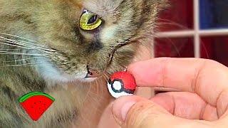 Самый маленький ПОКЕБОЛ *** DIY: smallest ever Pokeball (Pokemon Go)