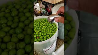 Lye Curing Olives Made Easy