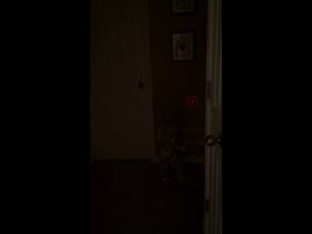 Baby chases laser light