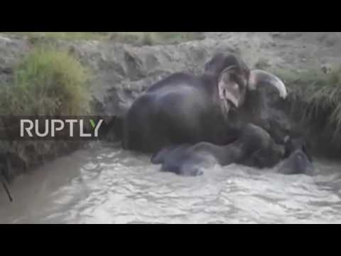 Sri Lanka: Four elephants rescued after falling into well in Omanthai