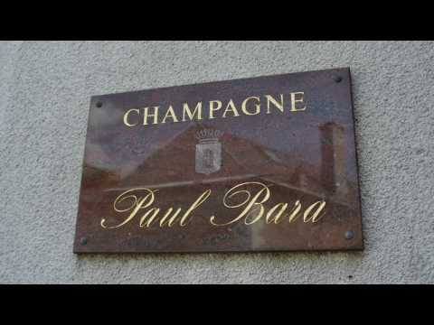 wine article A top Champagne Education by Guild Somm