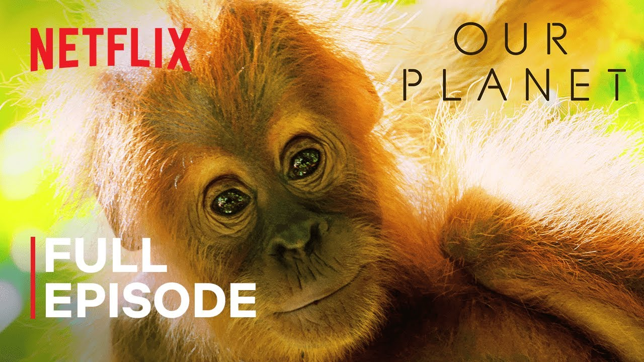 Our Planet | Jungles | FULL EPISODE | Netflix - YouTube