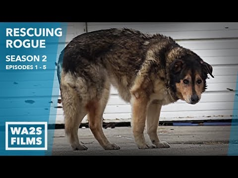 Stray Dogs Everywhere & Puppy House: Rescuing Rogue Season 2 Episode 1-5 Hope For Dogs Like My DoDo