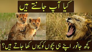 Why Do Some Animals Eat Their Babies | Urdu / Hindi