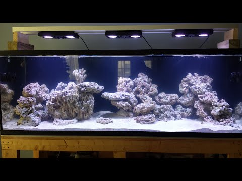 180 gallon reef tank project day 8 youtube for 180 gallon fish tank