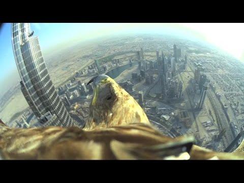 Dubai World Record Eagle Flight uncut versi, the full 5 minutes flight