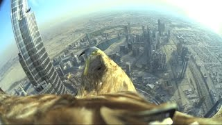 Dubai World Record Eagle Flight (uncut version, the full 5 minutes flight)
