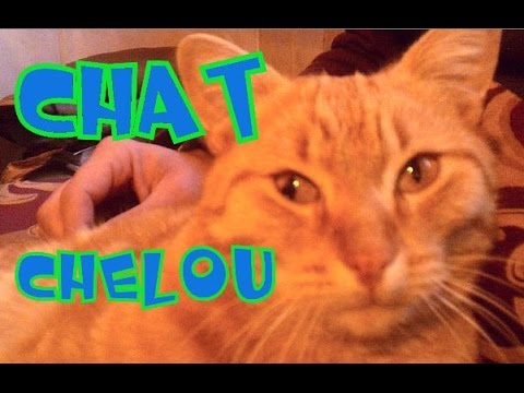 Chelou, Le Chat !