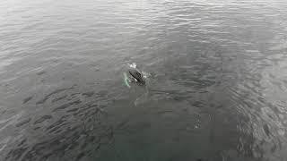 морская рыбалка в Баренцевом море Титовка