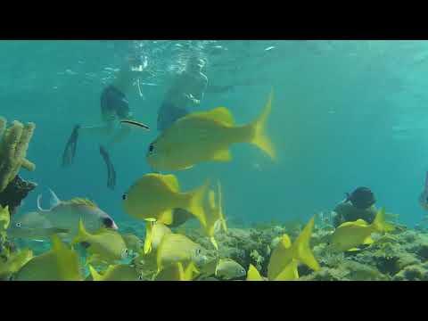 Grand Cayman Island Snorkeling!!!