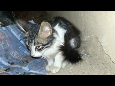 A New Kitten, Lonely, Afraid And Hungry
