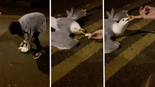 Student Tries To Save Seagull