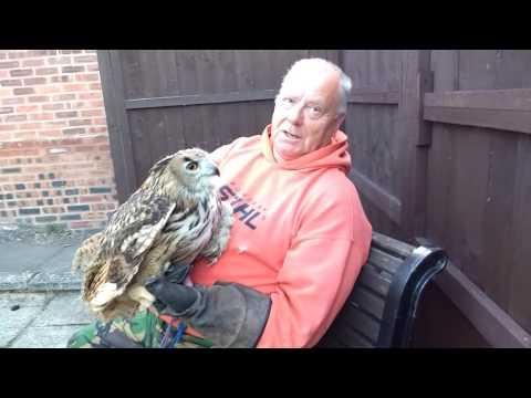 eagle owl manning