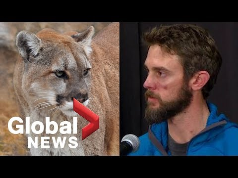 Clint August - HIGHLIGHTS: Man describes killing mountain lion during attack
