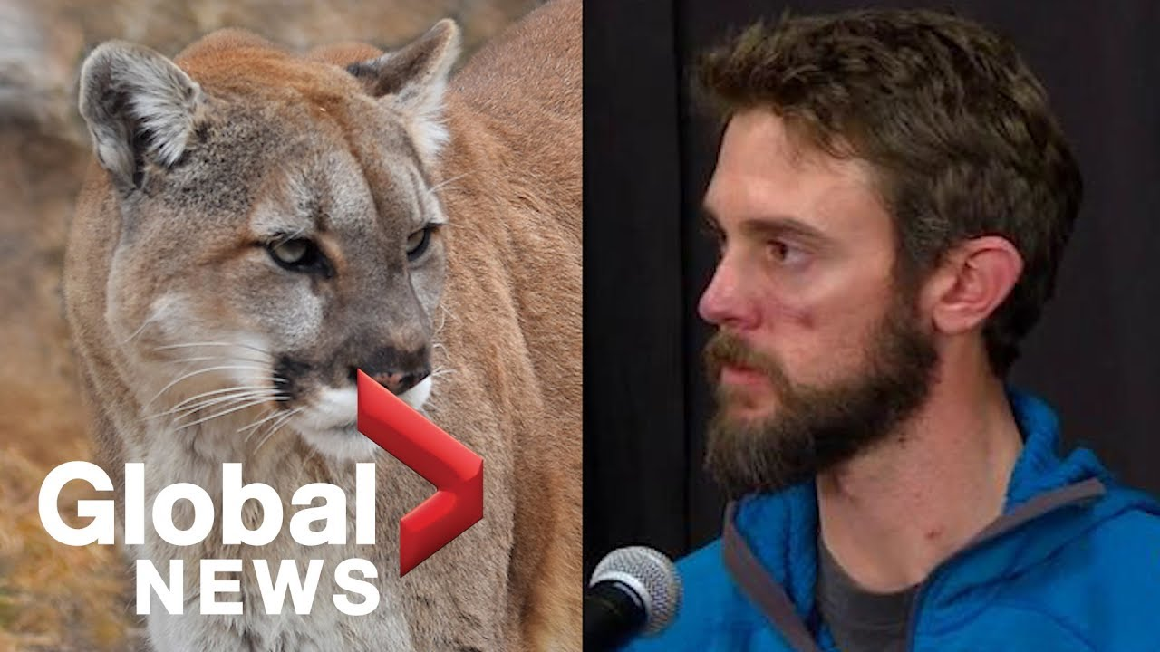 man kills mountain lion with bare hands