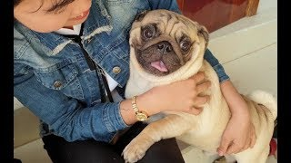 Funny Dogs | Cute And Friendly Dogs - Monkey Doo