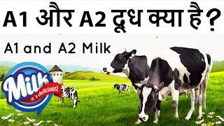 A1 vs A2 Cows Milk: What's the Difference, Benefits, & Nutrition