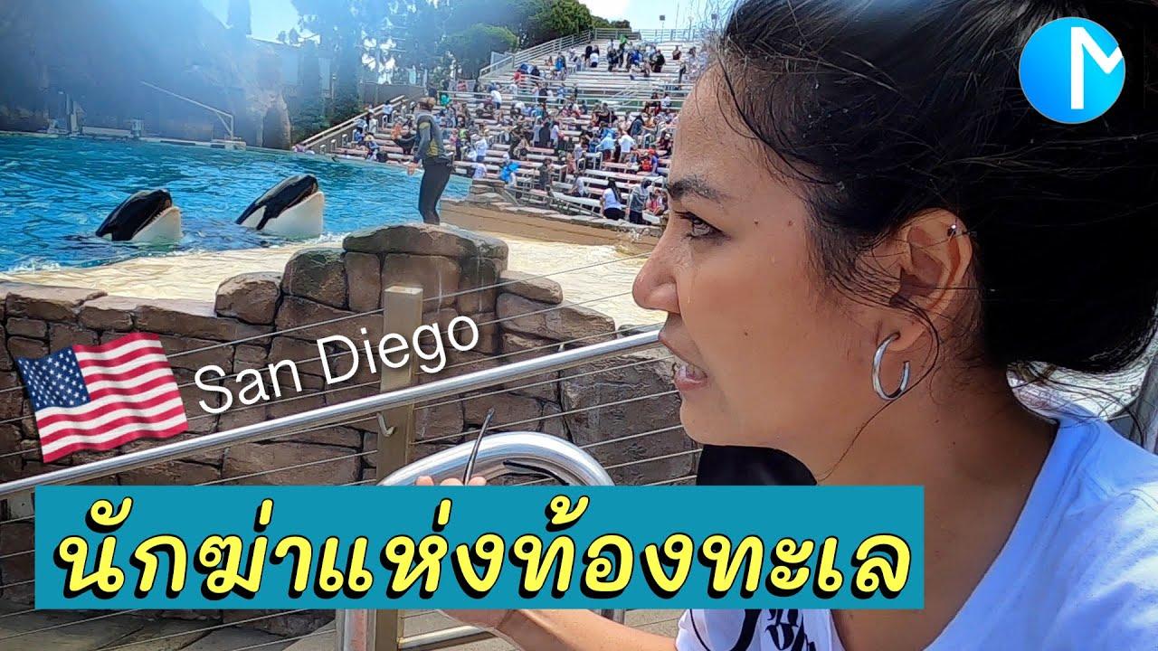 สวนสัตว์น้ำ SeaWorld San Diego ที่แรกในอเมริกา พาดูวาฬเพชฌฆาต #มอสลา   SeaWorld San Diego 2021