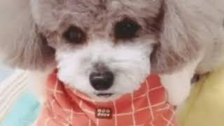 最爱宠物宝宝了,有问题都可以发邮件告诉我哦,zhouyuyo@gmail.com.
