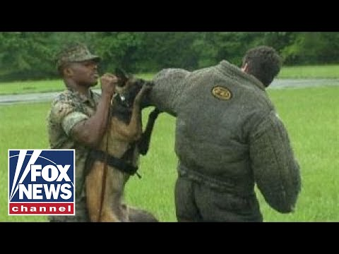 Leland Vittert helps with Marine dog training