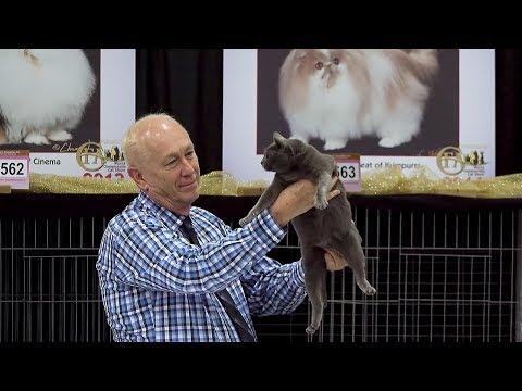 CFA International Cat Show 2017 - Best Veteran Cat