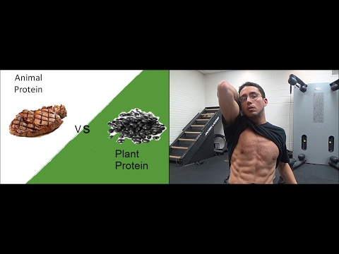 Better for 6-Pack Abs: Plant or Animal Protein?