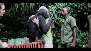 Le relâcher de Wounda expliqué par Jane Goodall VOSTFR