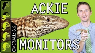 Ackie Monitor, The Best Pet Lizard?
