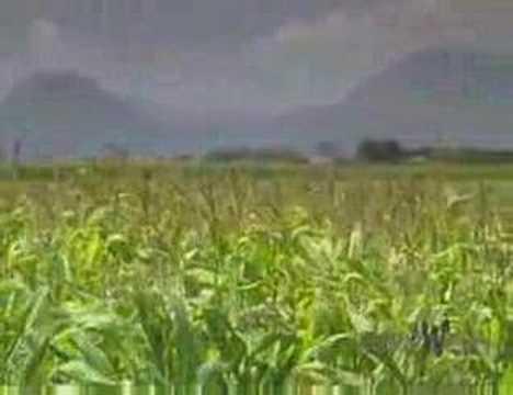 Biofuels & Food