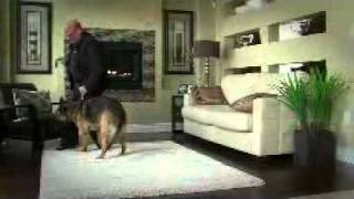 """how To Teach Your Dog To Walk Beside You At Heel"""
