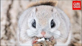 TOP 6 CUTE ANIMAL PET YOU CAN HAVE AT HOME!!