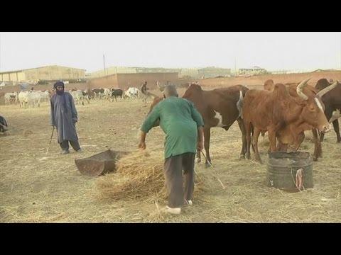 Mali, Un nouveau groupe armé voit le jour