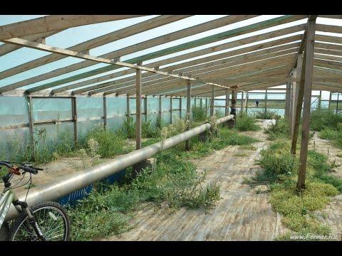 видео: Теплица для выращивании рассады арбузов на 120 000 корней