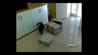 Кошачьи приколы - свежая нарезка
