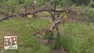 Diy Grape Vine Wire Trellis - Follow-up | Back To Basics Show