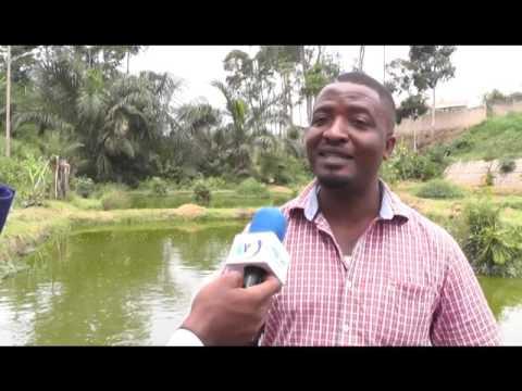 FISH FARMING IN CAMEROON