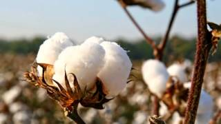Top 10 cotton producing countries