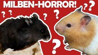 Alptraum Schädlinge, Krankheit und Hamster Abgabe?!