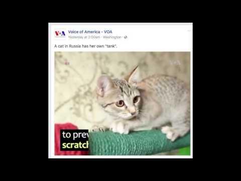 Voice of America Russian Tank Cat Video