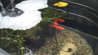 Goldfish Container Pond with DIY Filter