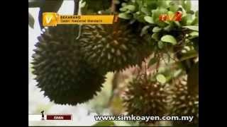 Video TV2 Interview - About Raja Kunyit & Musang King download MP3, 3GP, MP4, WEBM, AVI, FLV Juli 2018
