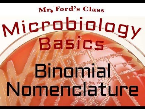 Binomial nomenclature : Microbiology Lectures