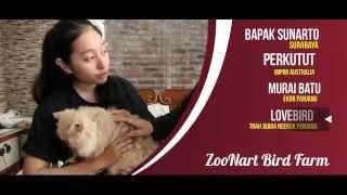 BIRD MARKET : Ternak Perkutut Warna Dan Murai Ekor Panjang ZOONART Bird Farm Surabaya