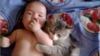 猫が赤ちゃんをあやす癒される動画集♪
