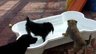 Xena And Quincy Pool Time