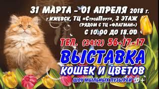 Выставка Кошек 31 марта-1 апреля WCF, Ижевск