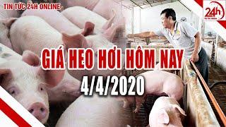 Giá heo hơi ngày hôm nay 4/4/2020 | Giá lợn hơi Đồng Nai giảm mạnh | Tin tức 24h
